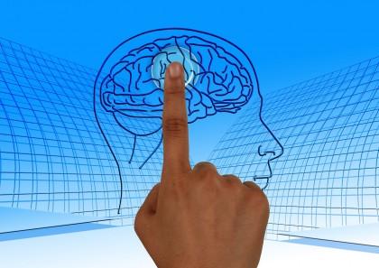 brain-770044_1280-1